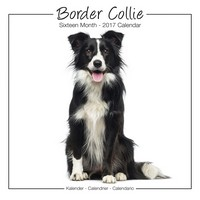 Border Collie Studio Range Wall Calendar 2017