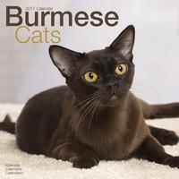 Cats - Burmese Wall Calendar 2017