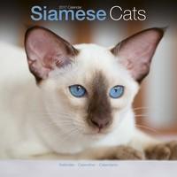 Cats - Siamese Wall Calendar 2017