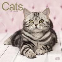 Cats Wall Calendar 2017