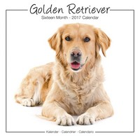 Golden Retrievers Studio Range Wall Calendar 2017