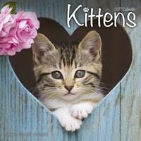 Kittens Wall Calendar 2017