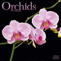 Orchids  Wall Calendar 2017