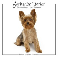 Yorkshire Terrier Studio Range Wall Calendar 2017