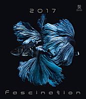 Fascination Wall Calendar 2017