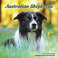 Australian Shepherds Wall Calendar 2017