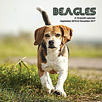 Beagles Wall Calendar 2017