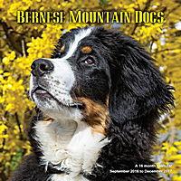 Bernese Mountain Dogs Wall Calendar 2017