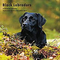 Black Labradors Wall Calendar 2017