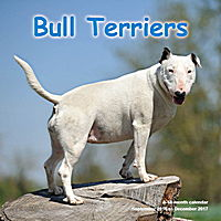 Bull Terriers Wall Calendar 2017