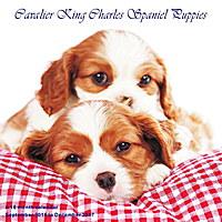 Cavalier King Charles Spaniel Puppies Wall Calendar 2017