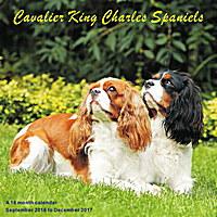 Cavalier King Charles Spaniels Wall Calendar 2017