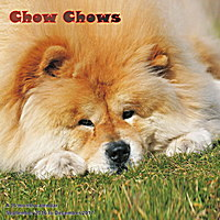 Chow Chows Wall Calendar 2017