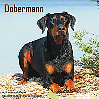 Dobermann Wall Calendar 2017