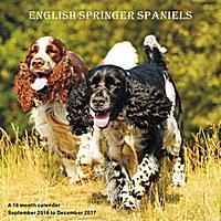 English Springer Spaniels Wall Calendar 2017