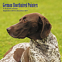German Shorthaired Pointers Wall Calendar 2017