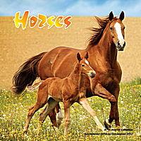 Horses Wall Calendar 2017