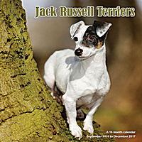 Jack Russell Terriers Wall Calendar 2017