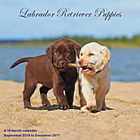 Labrador Retriever Puppies Wall Calendar 2017