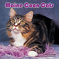 Maine Coon Cats Wall Calendar 2017