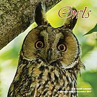 Owls Wall Calendar 2017