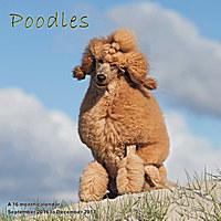 Poodles Wall Calendar 2017