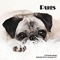 Pugs Wall Calendar 2017