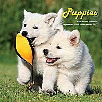 Puppies Wall Calendar 2017