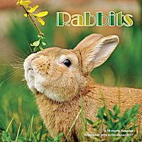 Rabbits Wall Calendar 2017