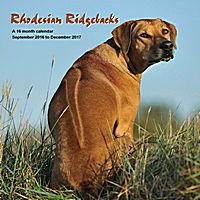 Rhodesian Ridgebacks Wall Calendar 2017