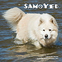 Samoyed Wall Calendar 2017