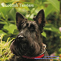 Scottish Terriers Wall Calendar 2017