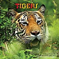 Tigers Wall Calendar 2017
