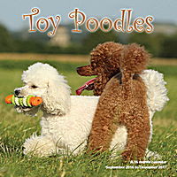 Toy Poodles Wall Calendar 2017
