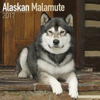 Alaskan Malamute Wall Calendar 2017