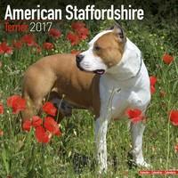 American Staffordshire Terrier Wall Calendar 2017