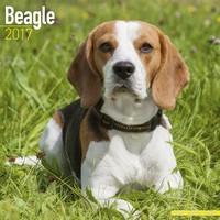 Beagle Wall Calendar 2017