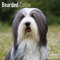 Bearded Collie Wall Calendar 2017