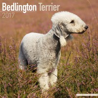 Bedlington Terrier Wall Calendar 2017