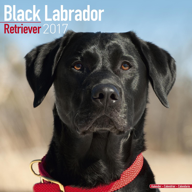 Calendar Labs : Black labrador retriever calendar pet prints inc
