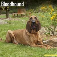 Bloodhound Wall Calendar 2017