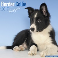 Border Collie Puppies Wall Calendar 2017