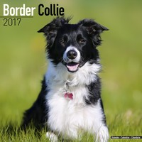 Border Collie Wall Calendar 2017