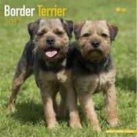 Border Terrier Wall Calendar 2017