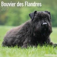 Bouvier Des Flandres (Euro) Wall Calendar 2017