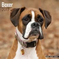 Boxer (Euro) Wall Calendar 2017