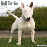 Bull Terrier Wall Calendar 2017