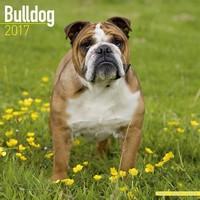 Bulldog Wall Calendar 2017