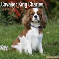 Cavalier King Charles Wall Calendar 2017