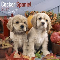 Cocker Spaniel Puppies Wall Calendar 2017